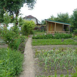наш огород летом