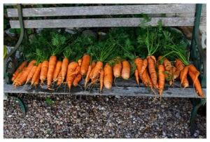 подготовка грядки под морковь