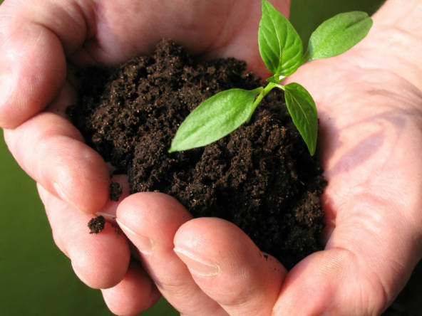 растение в руках