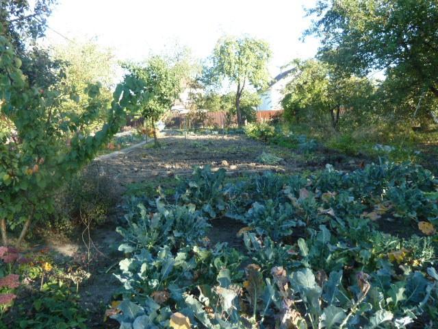 огород ранней осенью