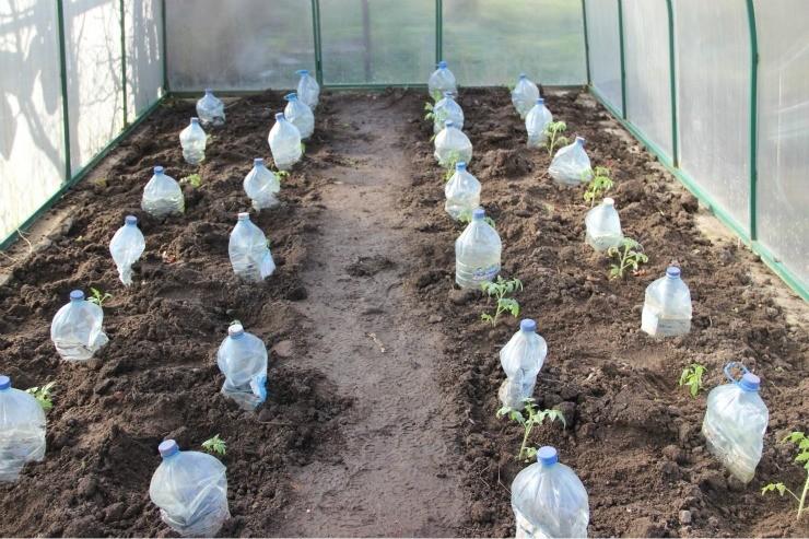 полив томатов в теплице через пластиковые бутылки