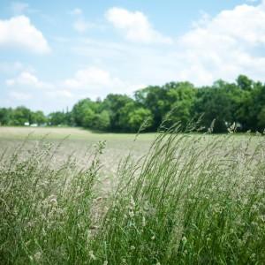 подкормка травяным настоем