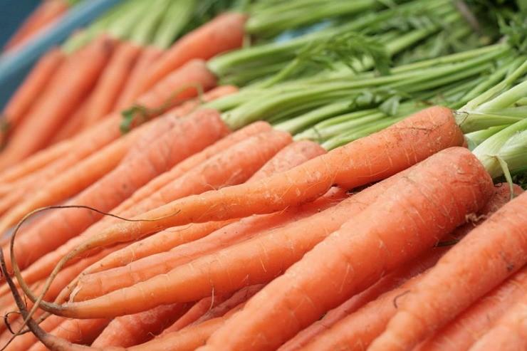 урожай молодой морковки