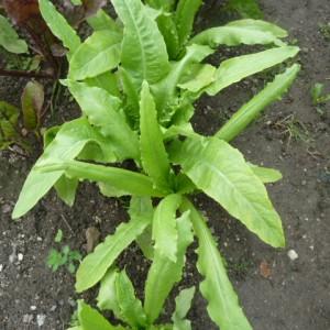 полезные свойства спаржевого салата