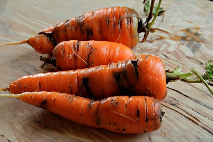 морковь повреждённая морковной мухой