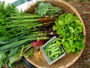 урожай от подзимних посевов овощей