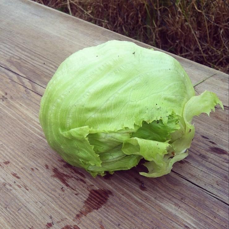 кочанный салат Айсберг