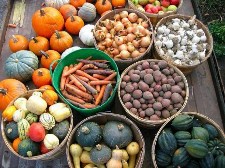 овощи перед закладкой на хранение