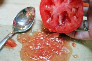 получение семян томатов