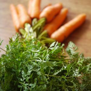 почему морковка вырастает рогатой