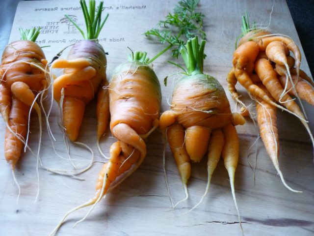 морковные уродцы