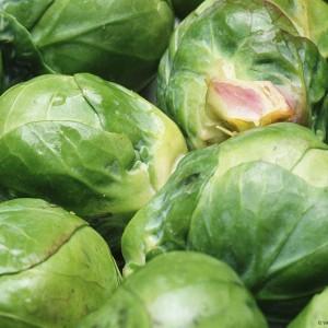 болезни и вредители брюссельской капусты