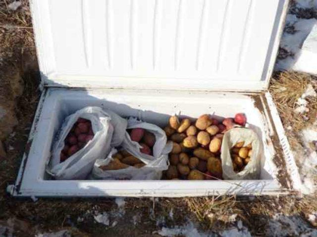 хранение овощей в холодильнике в земле