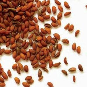 семена кресс-салата