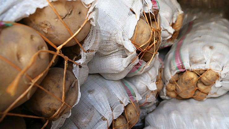 урожай картофеля в погребе