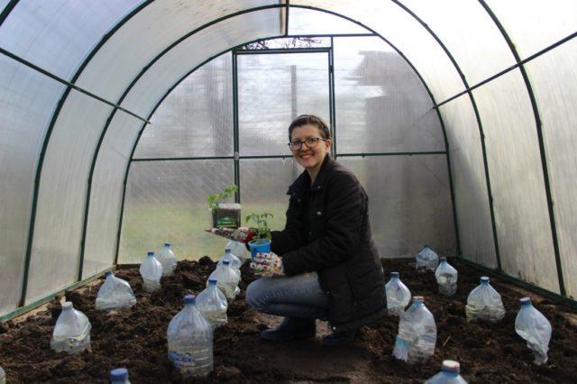 как вырастить качественную рассаду томатов