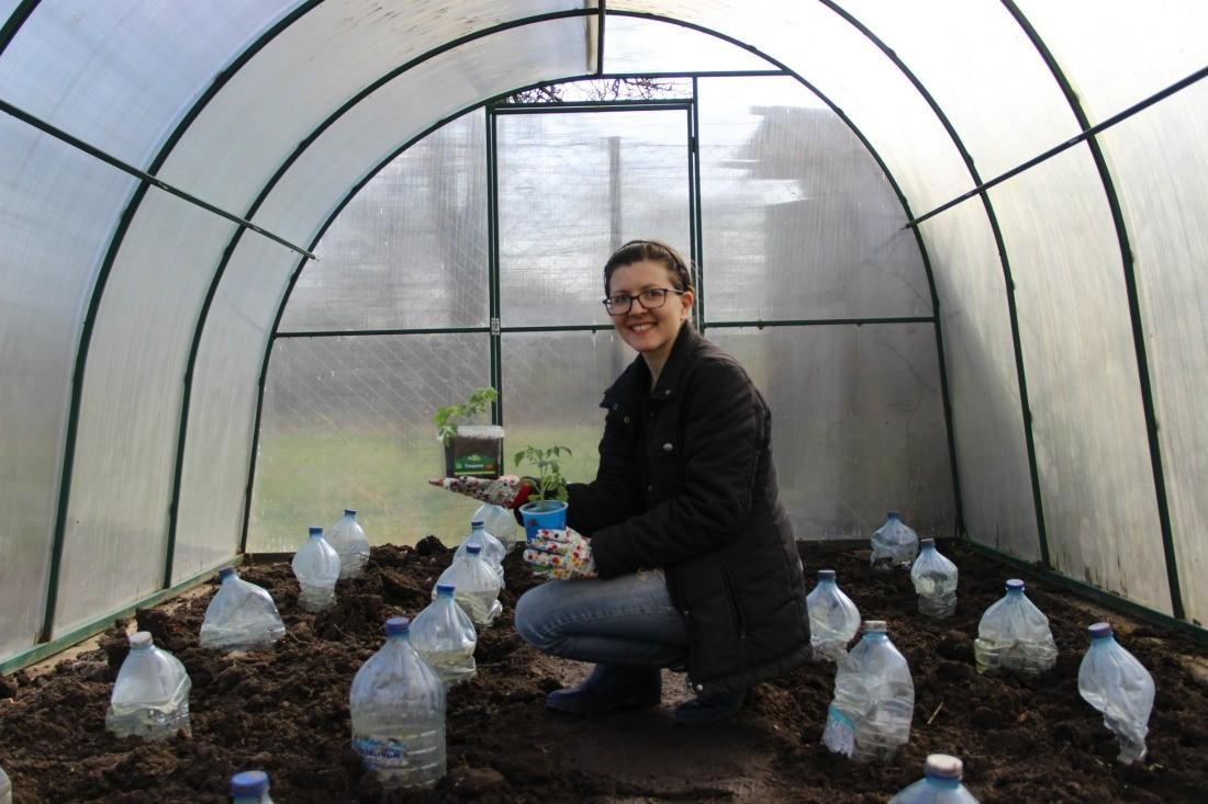 Советы по выращиванию томатов от рассады до уборки урожая