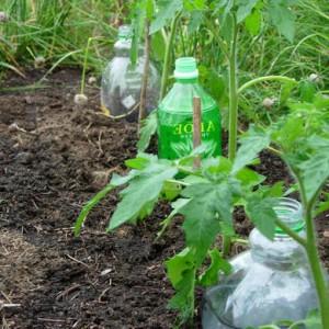 капельный полив через пластиковые бутылки
