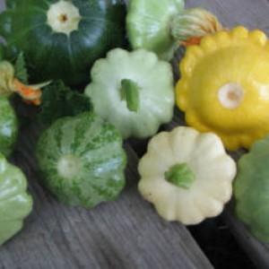 патиссоны разных цветов