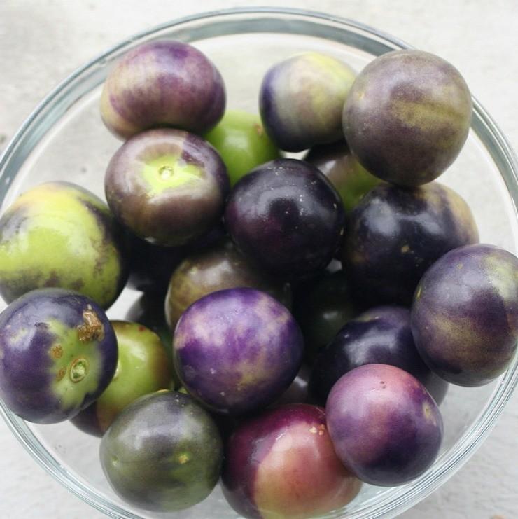 плоды физалиса овощного в тарелке