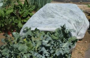 защита растений от заморозков