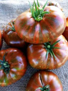 выращивание томатов на компостной куче