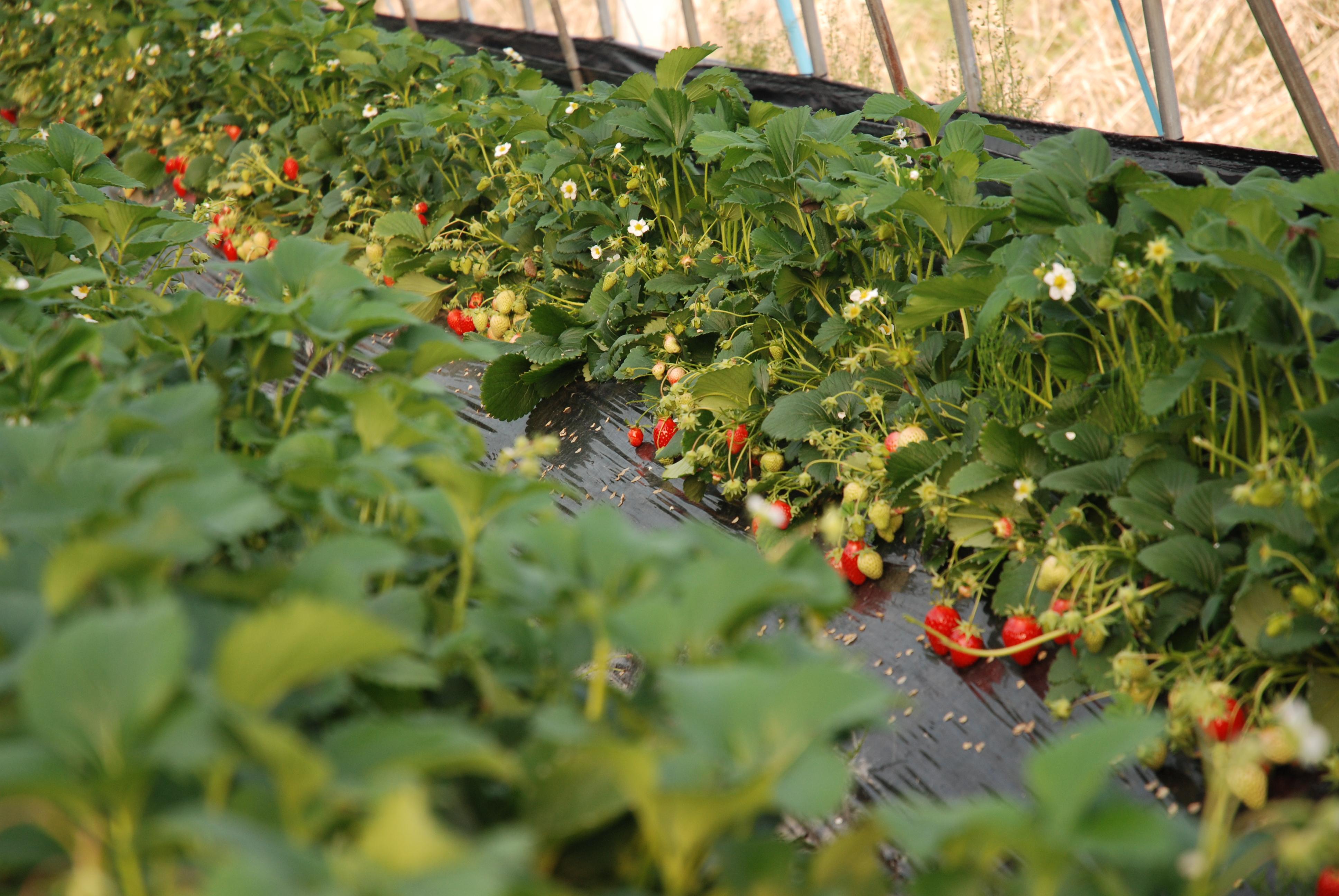 Теплицы: овощеводство и цветоводство, гидропоника и 26
