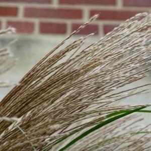 влияние ветра на почву