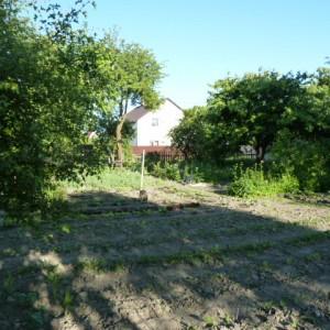 работы в огороде в июне