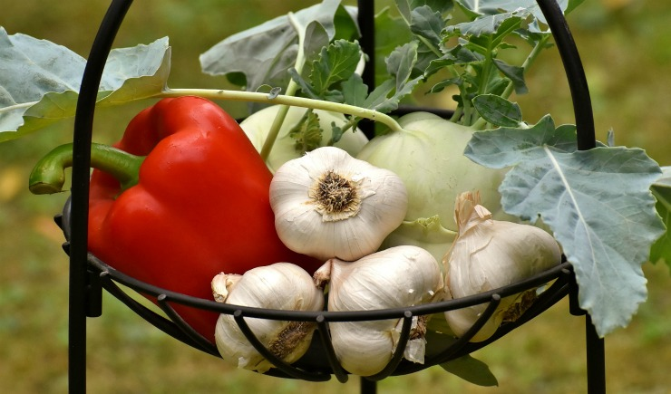 чеснок с другими овощами