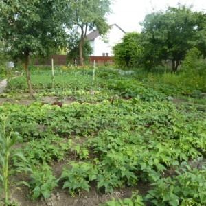огород возле дороги