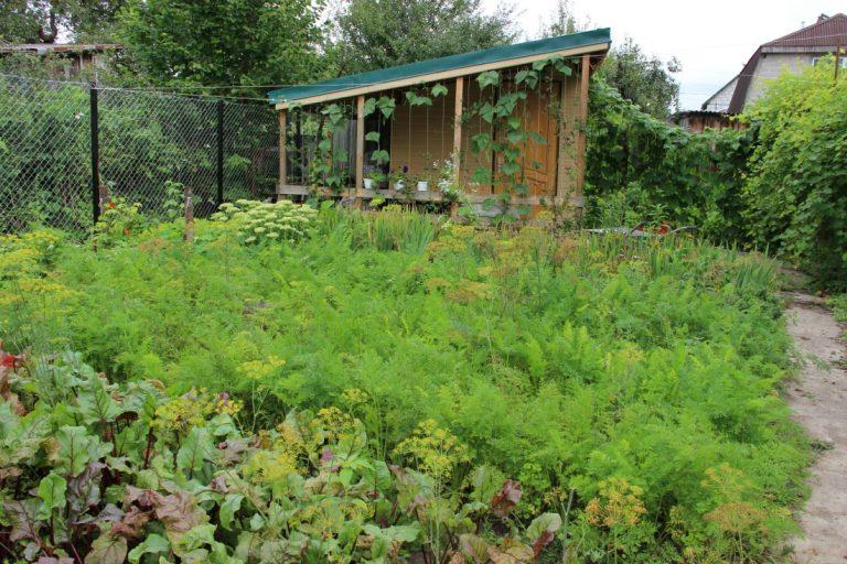 новолуние работы в саду и огороде