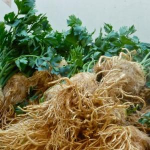 хранение корневого сельдерея