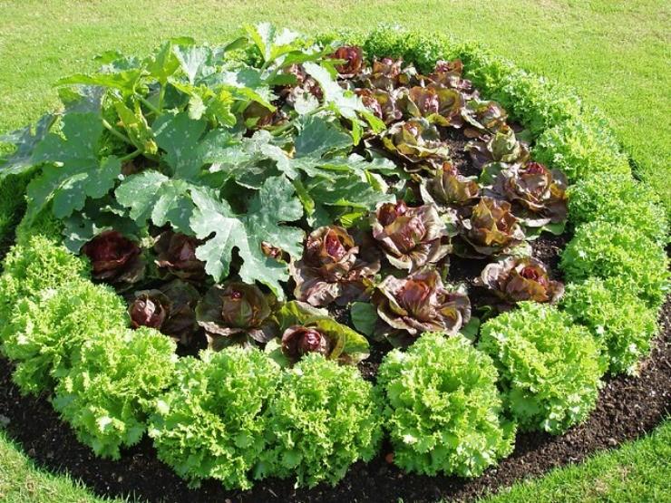 уплотнение кабачка салатом