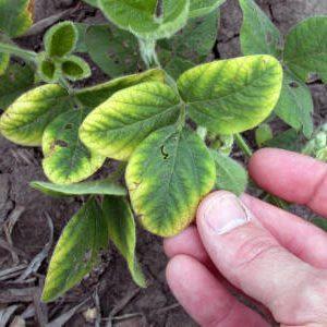 недостаток калия у растения