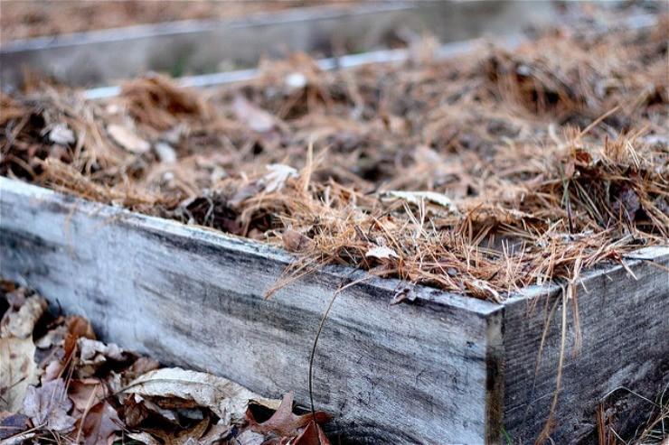 укрытие клубники на зиму сеном и листвой