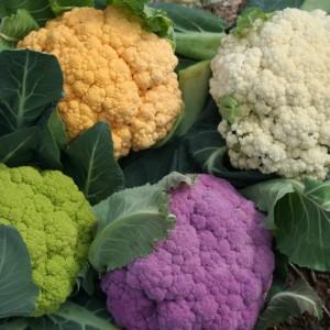 желтая, фиолетовая, белая и зеленая цветная капуста