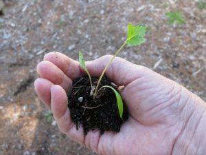 сроки посева семян