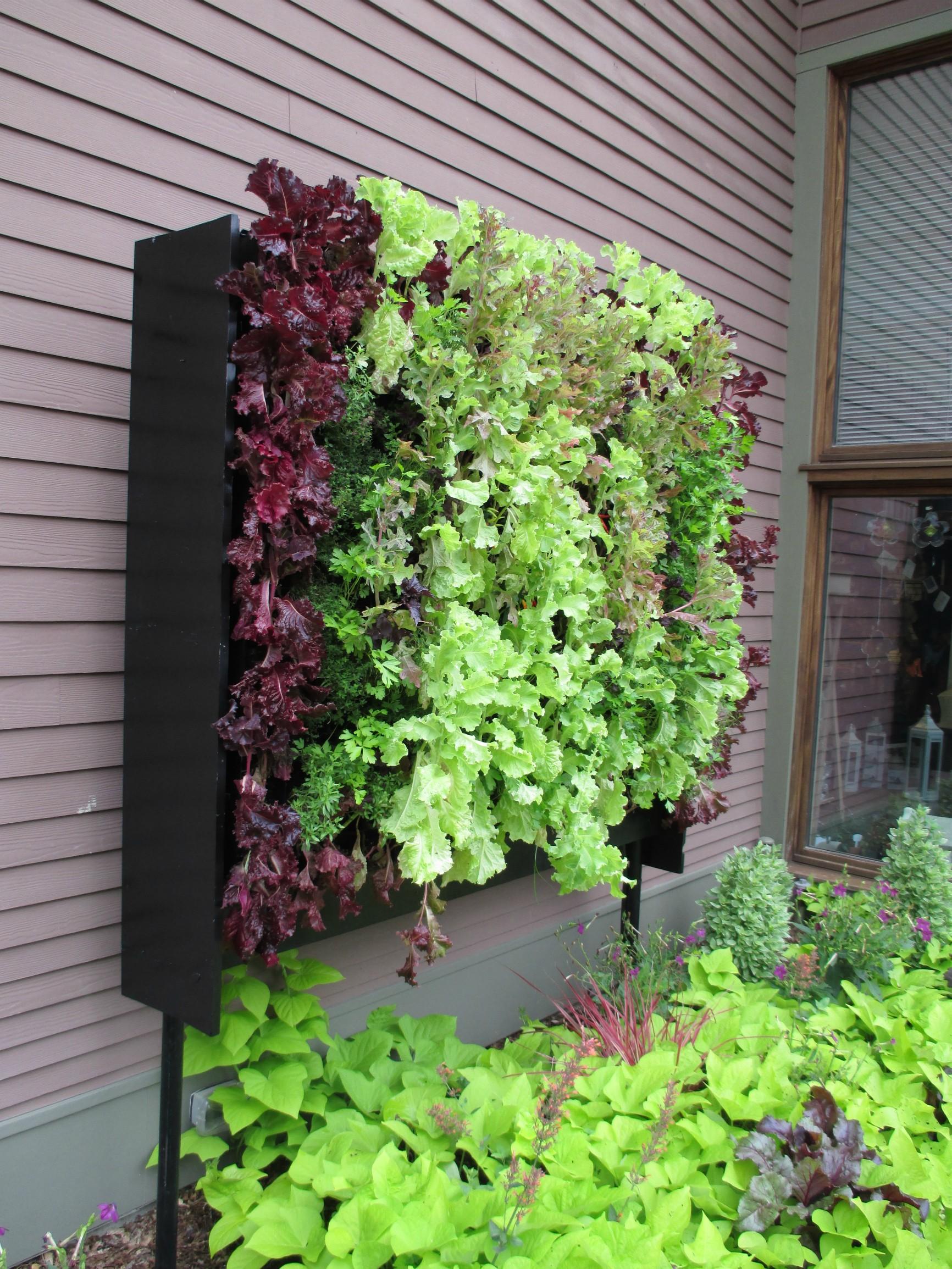 8 трав, которые можно вырастить на кухонном подоконнике 17