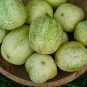 сорт огурца Хрустальное яблоко, огурец-лимон