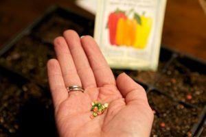 как получить свои семена перца