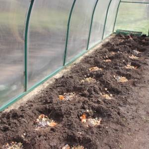 посадка томатов в теплицу