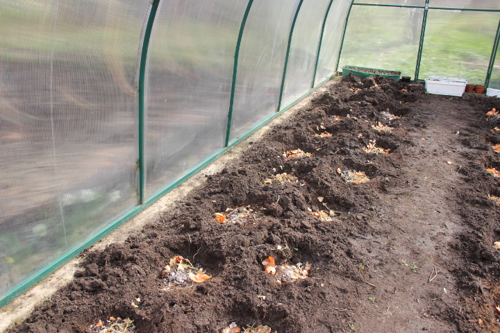 подготовка лунок для посадки томатов в теплицу