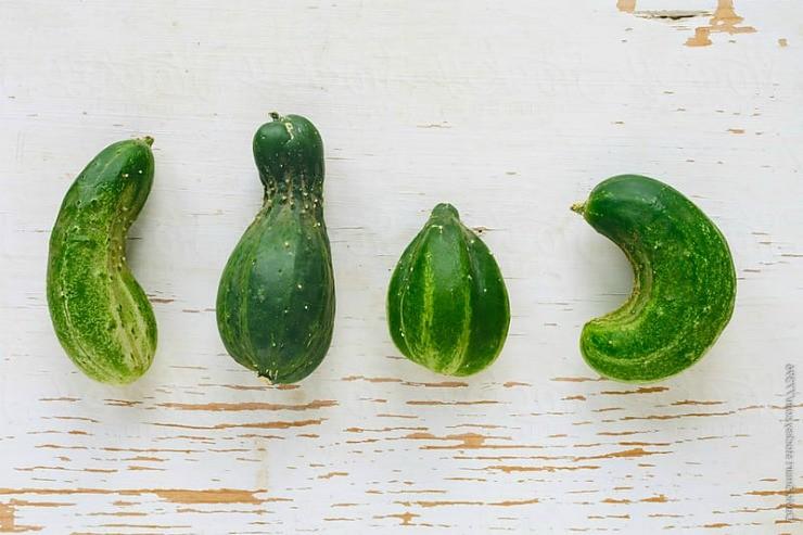 уродливые плоды огурцов