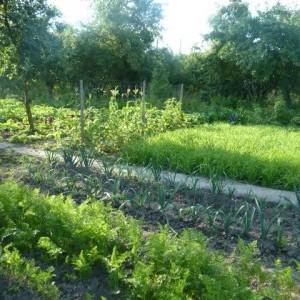 Огород (3)