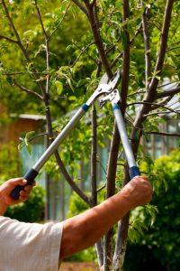 время обрезки деревьев