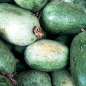плоды восковой тыквы бенинказа