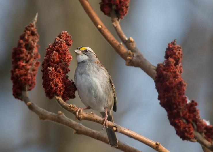 уксусное дерево с птицей на ветке