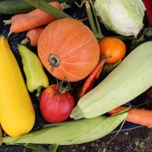 сахаристые овощи хранятся лучше