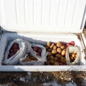 хранение овощей зимой в морозилке